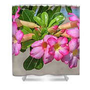 Desert Rose Or Chuanchom Dthb2106 Shower Curtain