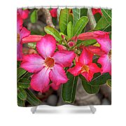 Desert Rose Or Chuanchom Dthb2108 Shower Curtain
