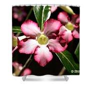 Desert Rose X4 Shower Curtain