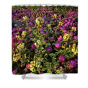 Desert Sand Verbena And Brown-eyed Primrose Below The Coyote Mountains California Shower Curtain