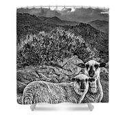 Desert Sheep Shower Curtain