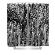 Desert Study 21 Shower Curtain