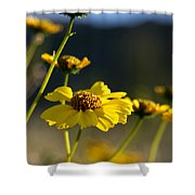 Desert Sunflower Shower Curtain