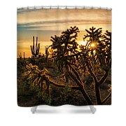 Desert Sunshine Shining Through  Shower Curtain