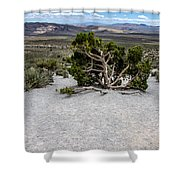 Desert Tree Shower Curtain