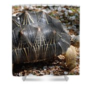 Desert Turtle With An Unusual Shell In The Wild Shower Curtain