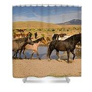 Desert Water Shower Curtain