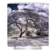 Desertic Tree Shower Curtain