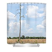 Desolate Tree Shower Curtain