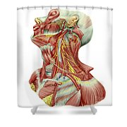 Detailed Dissection View Of Human Neck Shower Curtain
