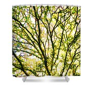 Detailed Tree Branches 1 Shower Curtain