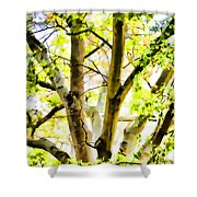 Detailed Tree Branches 2 Shower Curtain