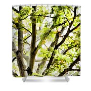 Detailed Tree Branches 3 Shower Curtain