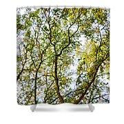 Detailed Tree Branches 5 Shower Curtain