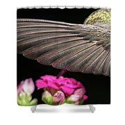 Details Of The Hummingbird Wing Shower Curtain