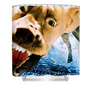 Devil Dog Underwater Shower Curtain