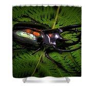 Devil Horned Rhino Beetle Shower Curtain