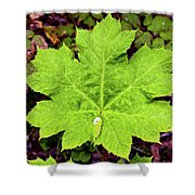 Devil's Club Leaf Shower Curtain