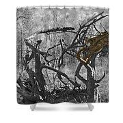 Devil's Tree Shower Curtain