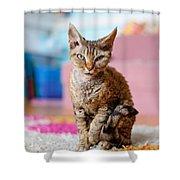 Devon Rex Purebred Domestic Cat Shower Curtain