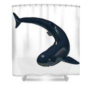Devonian Cladoselache Shark Shower Curtain