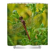 Dew Covered 5904 Shower Curtain