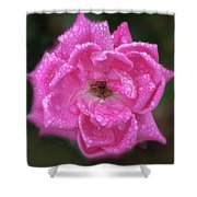 Dew Covered Rose Shower Curtain