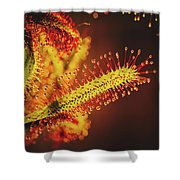 Dew Covered Tentacles Shower Curtain