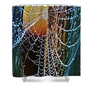 Dew Covered Web Shower Curtain