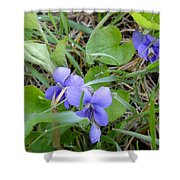 Dew Covered Wild Violets Shower Curtain
