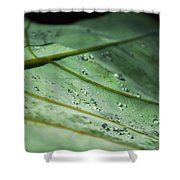 Dew Droplets Of Nature Shower Curtain