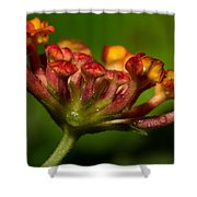 Dew Drops In A Desert Garden Shower Curtain