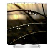 Dew Drops Shower Curtain