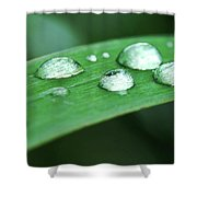 Dew Drops On A Blade Of Grass Shower Curtain
