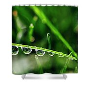 Dew Drops On Blade Of Grass Shower Curtain