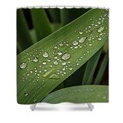 Dew Drops On Leaf Shower Curtain