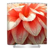 Dew -drops On The Dahlia 2  Shower Curtain
