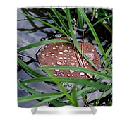 Dew It At The Creek Shower Curtain