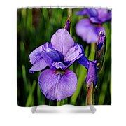 Dew Kissed Iris Shower Curtain
