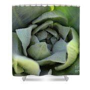 Dew On Common Mullein Shower Curtain