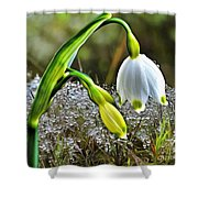 Dew On Lilly Of The Valley Shower Curtain
