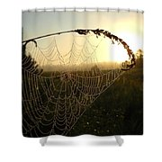 Dew On Spider Web At Sunrise Shower Curtain