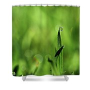 Dew On The Grass Shower Curtain