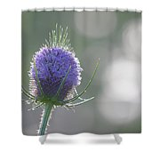 Dew On Thistle 2 Shower Curtain