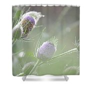 Dew On Thistles 1 Shower Curtain