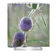Dew On Thistles 2 Shower Curtain
