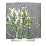 Dew On Thistles 3 Shower Curtain