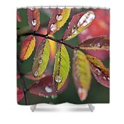 Dew On Wild Rose Leaves In Fall Shower Curtain