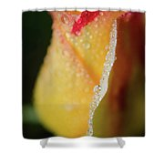 Dew On Yellow Rose Nature Photograph Shower Curtain