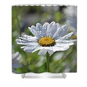 Dewdrop Daisy Shower Curtain